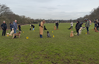 The only dog school licensed by the Corporation of London to train on Hampstead Heath