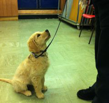 You will learn how to teach your puppy to pay attention